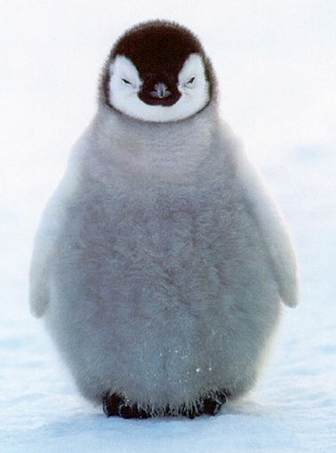 Penguin | Penguin 2.0 - The Good, The Bad, And The Ugly