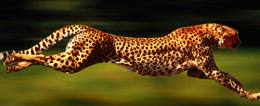 Cheetah | Make Your Landing Pages Convert Faster Than a Cheetah on Steroids
